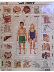 Pussel Vår Kropp